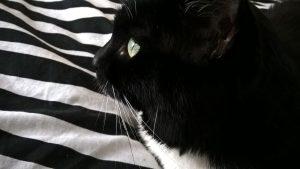 Katze Luzi und der WordPress Gutenberg Gruppe Block