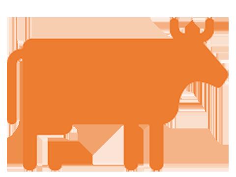 Kuh Piktogramm